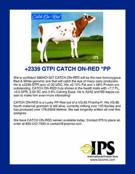 566HO1321 CATCH ON-RED *PP