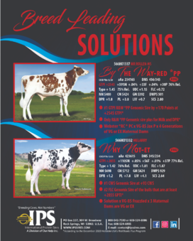 Breed Leading Solutions